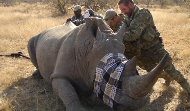 ©Animal Planet/Rhino Wars