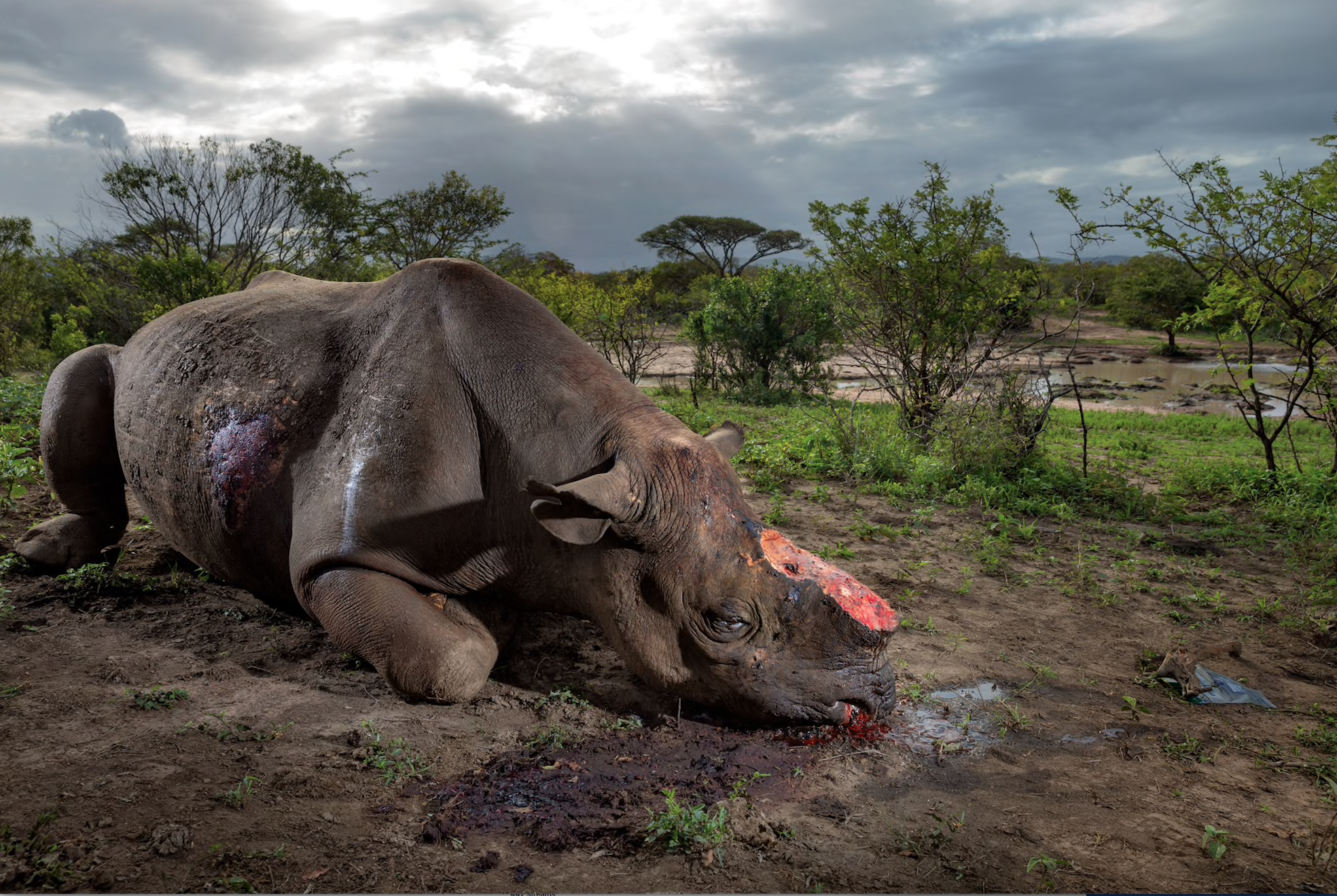 ©Brent Stireton/National Geographic