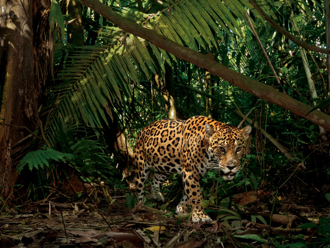 ©Steve Winter/National Geographic