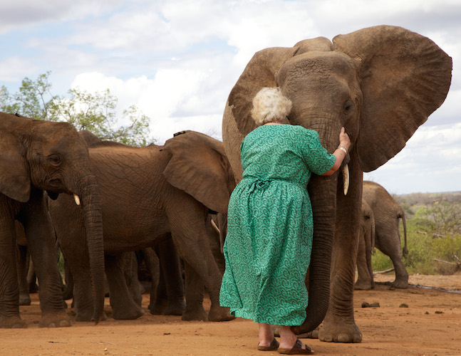 Daphne Sheldrick with 'Wendie,' May, 2011.  ©David Sheldrick Wildlife Trust