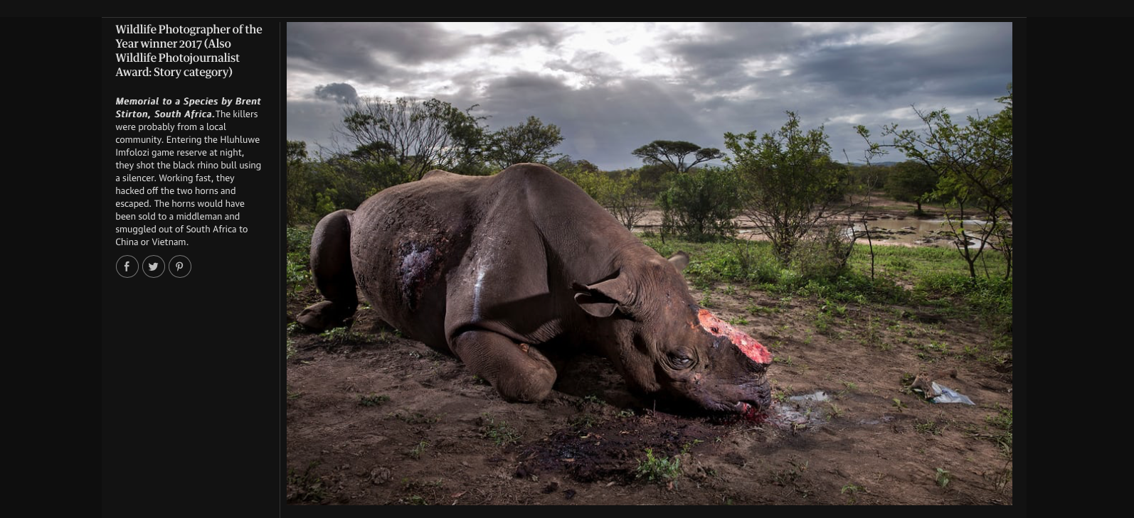 ©Brent Stirton/Natural History Museum WPOTY 2017 via The Guardfian