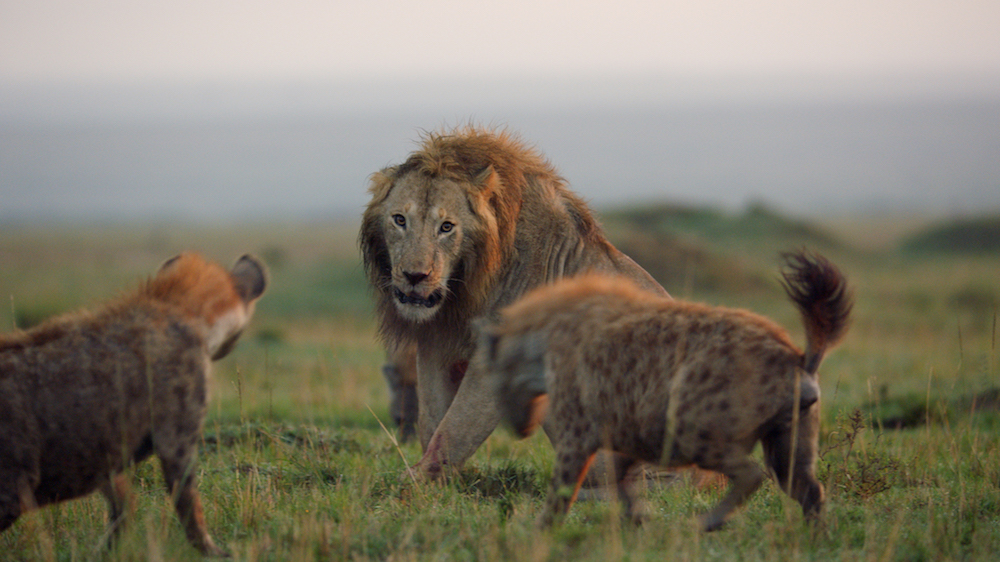©BBC/Natural History Unit