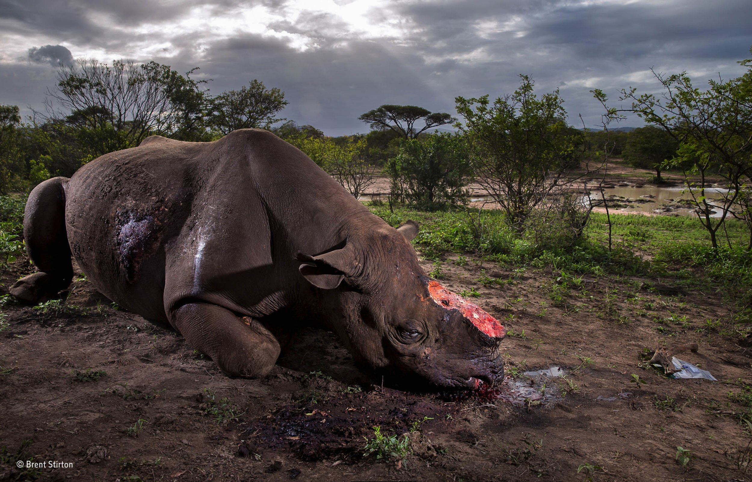 ©Brent Stirton/WPOTY53/Getty Images