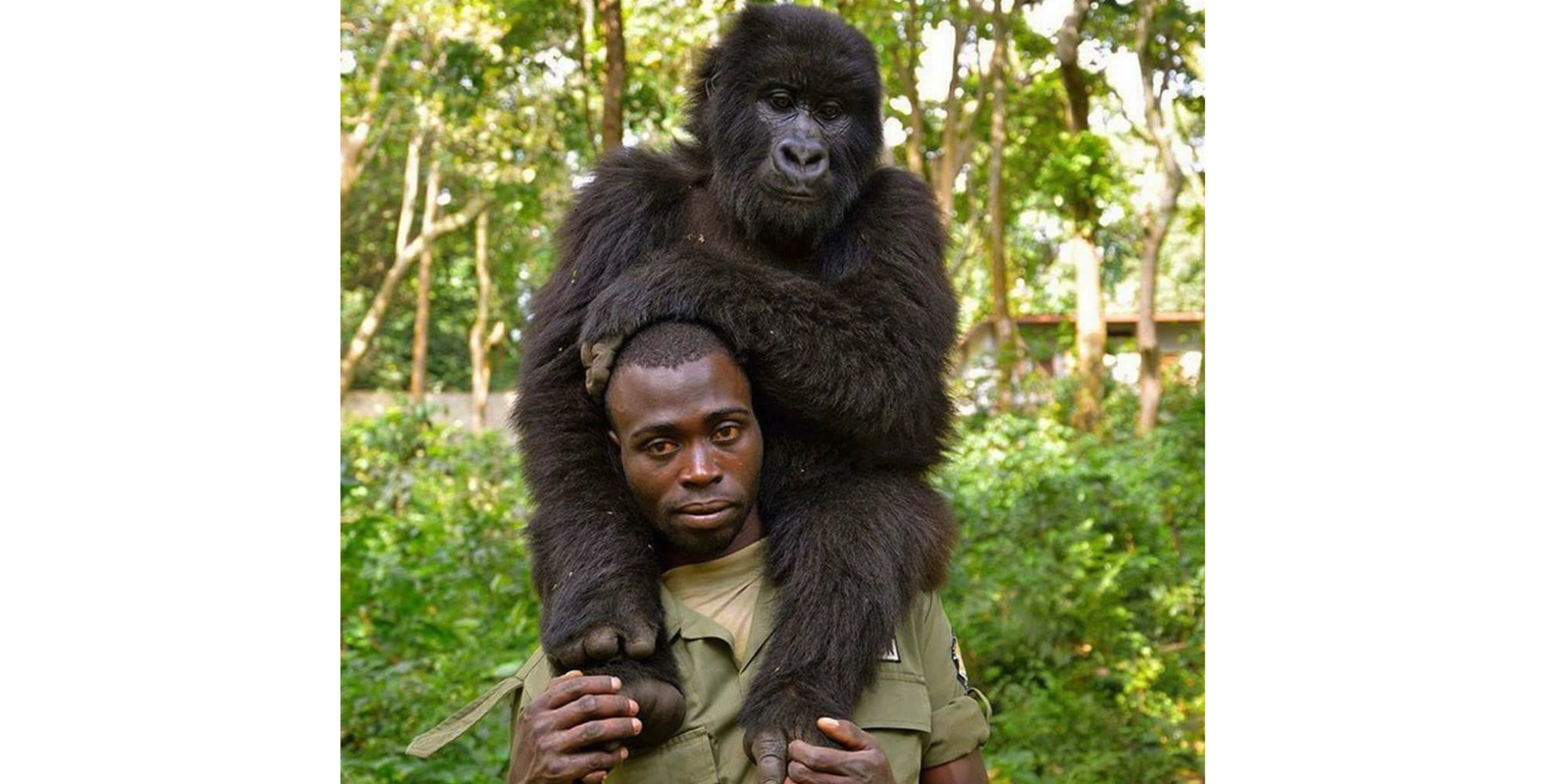 @Virunga National Park