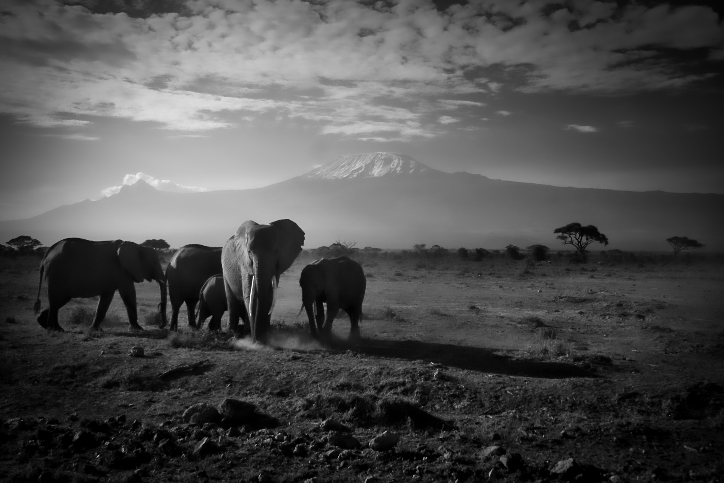 Amboseli National Park, Kenya.