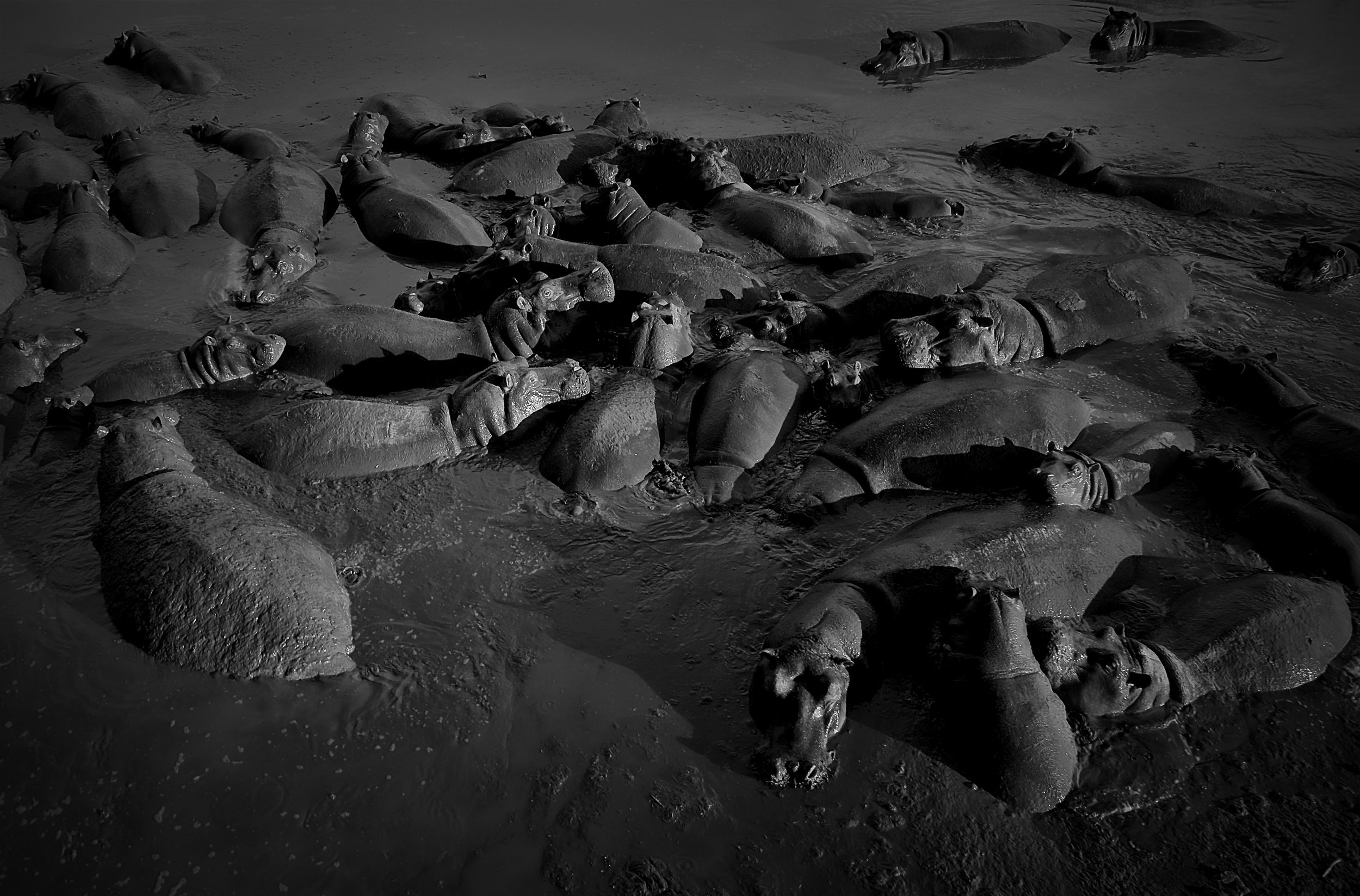 Hippos, Serengeti National Park, Tanzania.