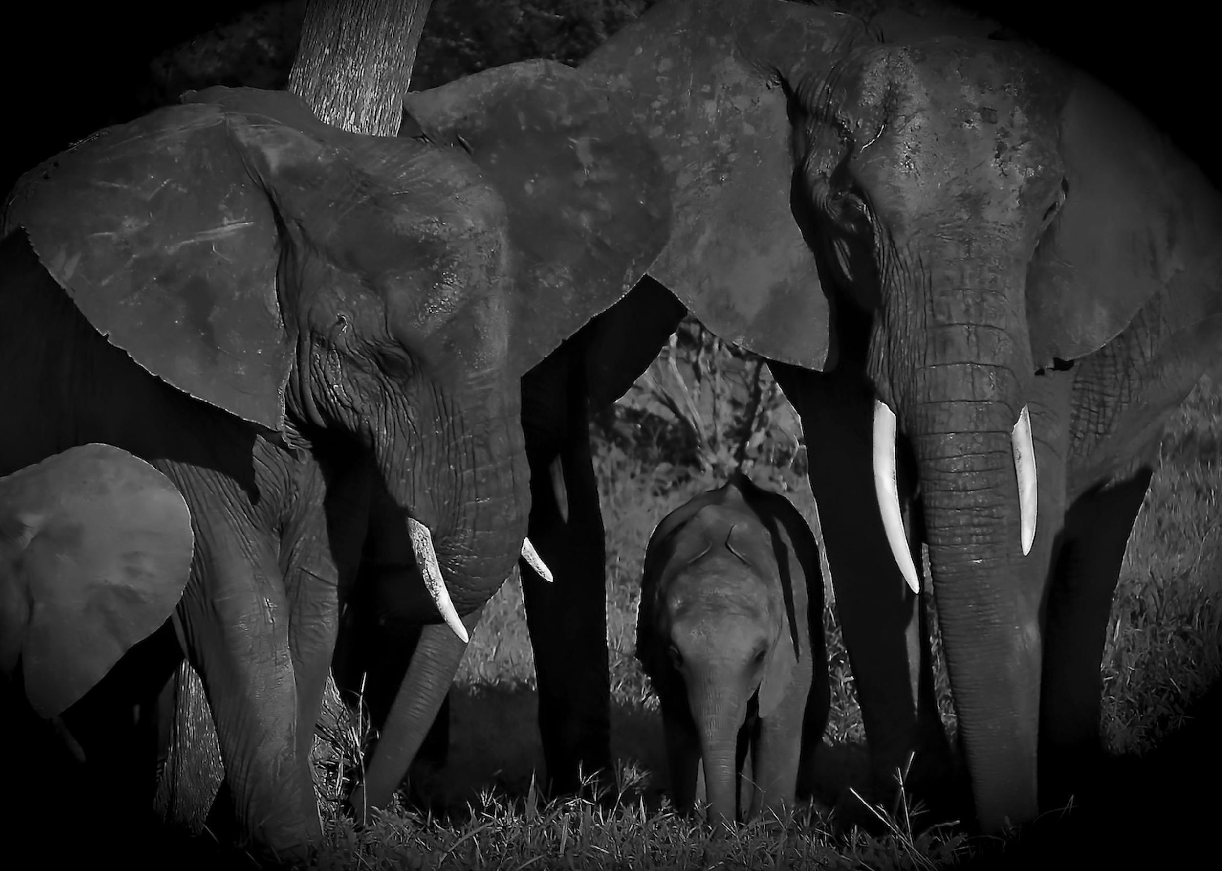 ©Alex Strachan-Tarangire National Park, Tanzania.
