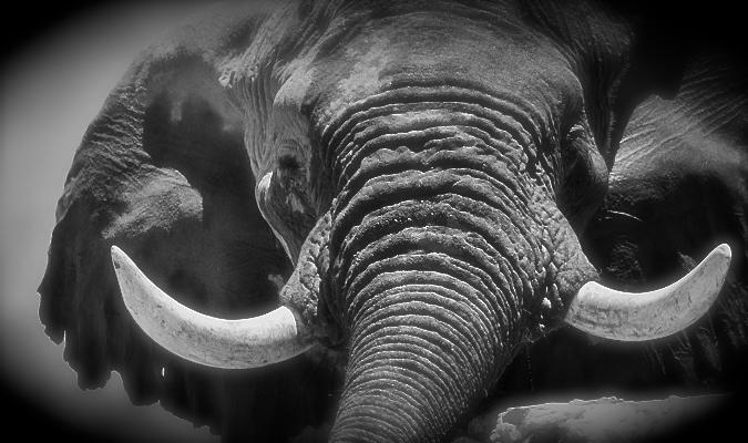©Ingrid Mandt-Africa Geographic