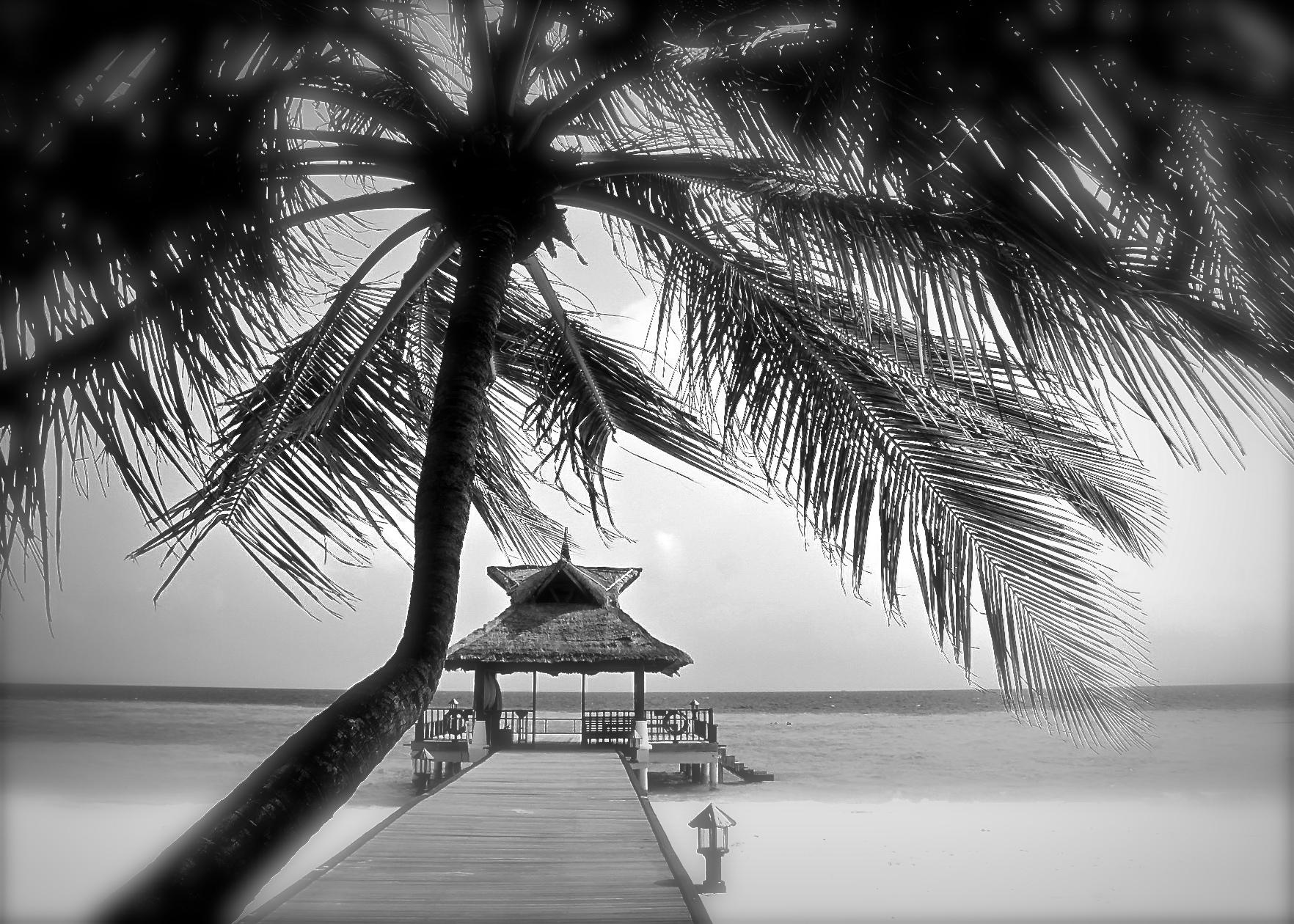 ©Sharon Ang-Pixabay