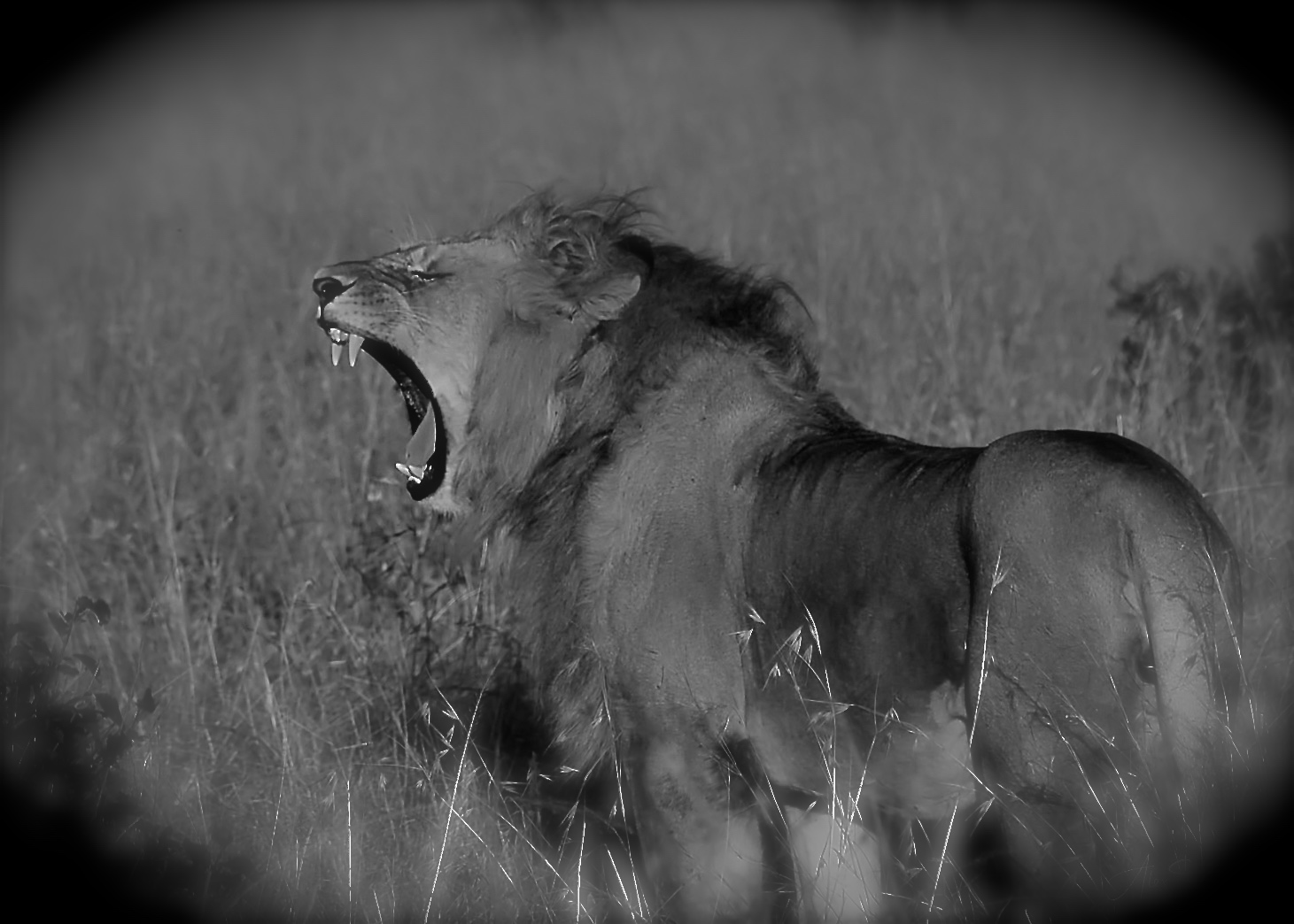 ©Alex Strachan - Maasai Mara National Reserve, Kenya