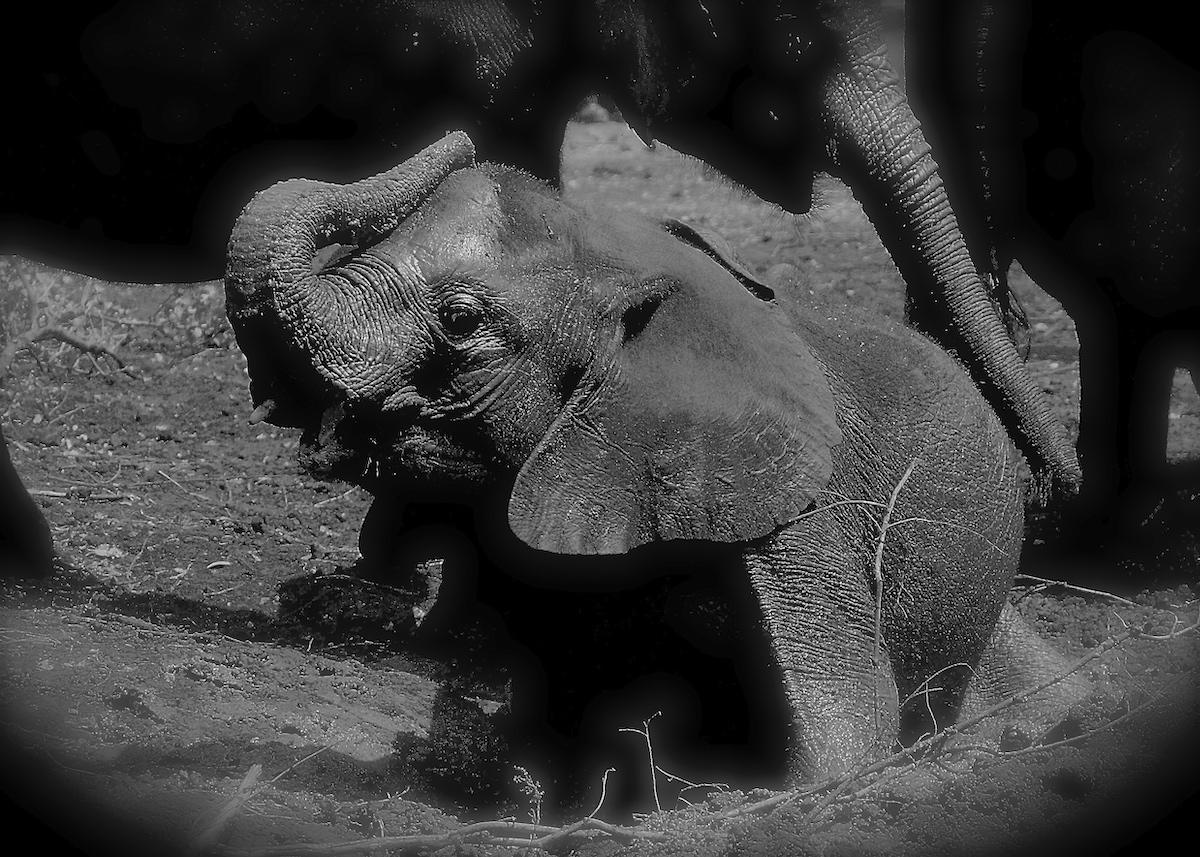 ©Alex Strachan - David Sheldrick Wildlife Trust