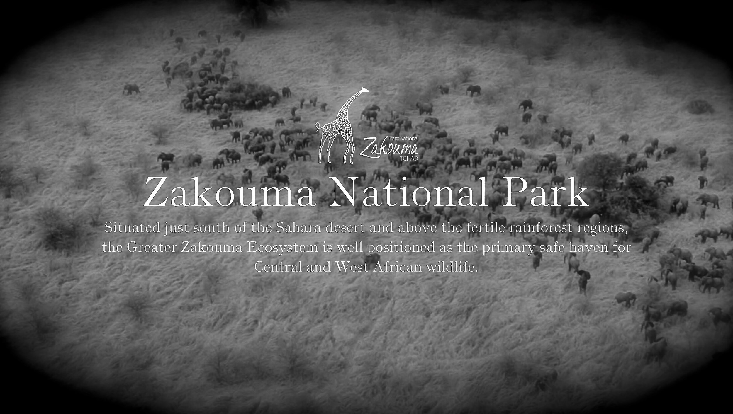 @African Parks.org