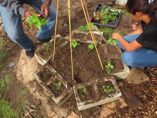 chet-plants-in-cement.jpg