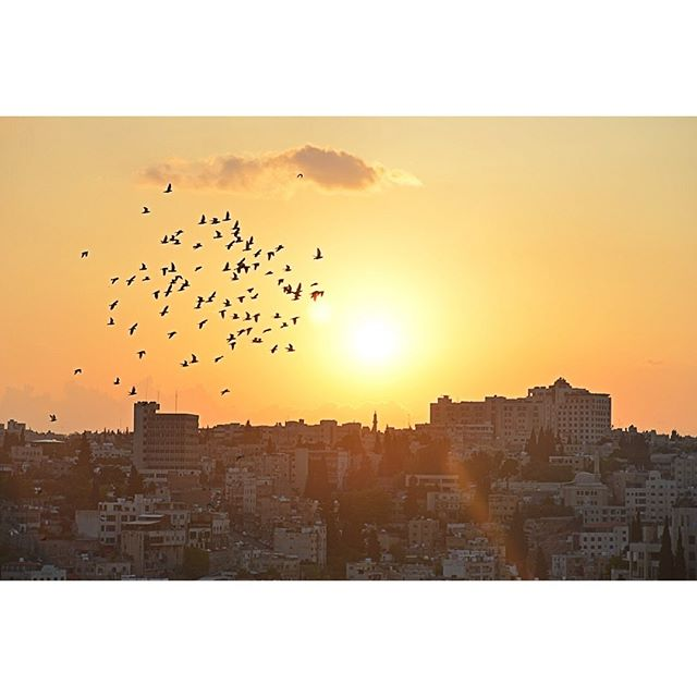 Sunset flight over Amman #city #romancitadel #jordan #amman
