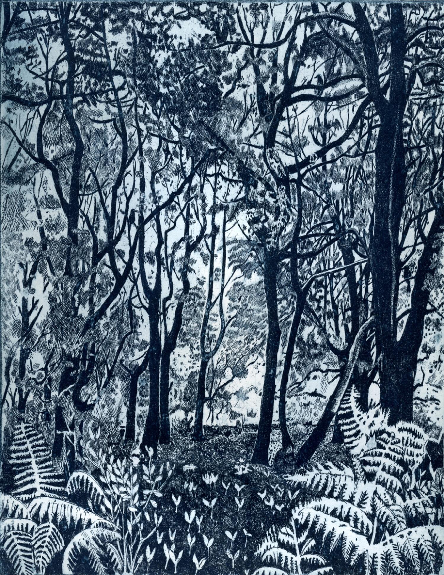 Bracken Edge   etching