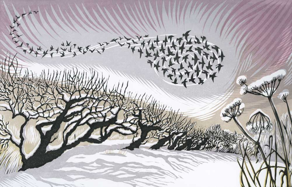Midwinter Starlings   linocut   18 x 28 cm  EDITION SOLD OUT