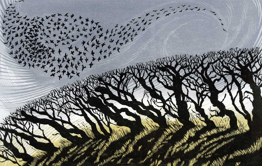 November Starlings   linocut   18 x 28 cm  EDITION SOLD OUT