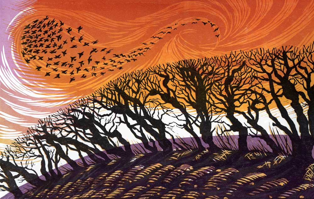 Winter Starlings II   linocut   18 x 28 cm  EDITION SOLD OUT