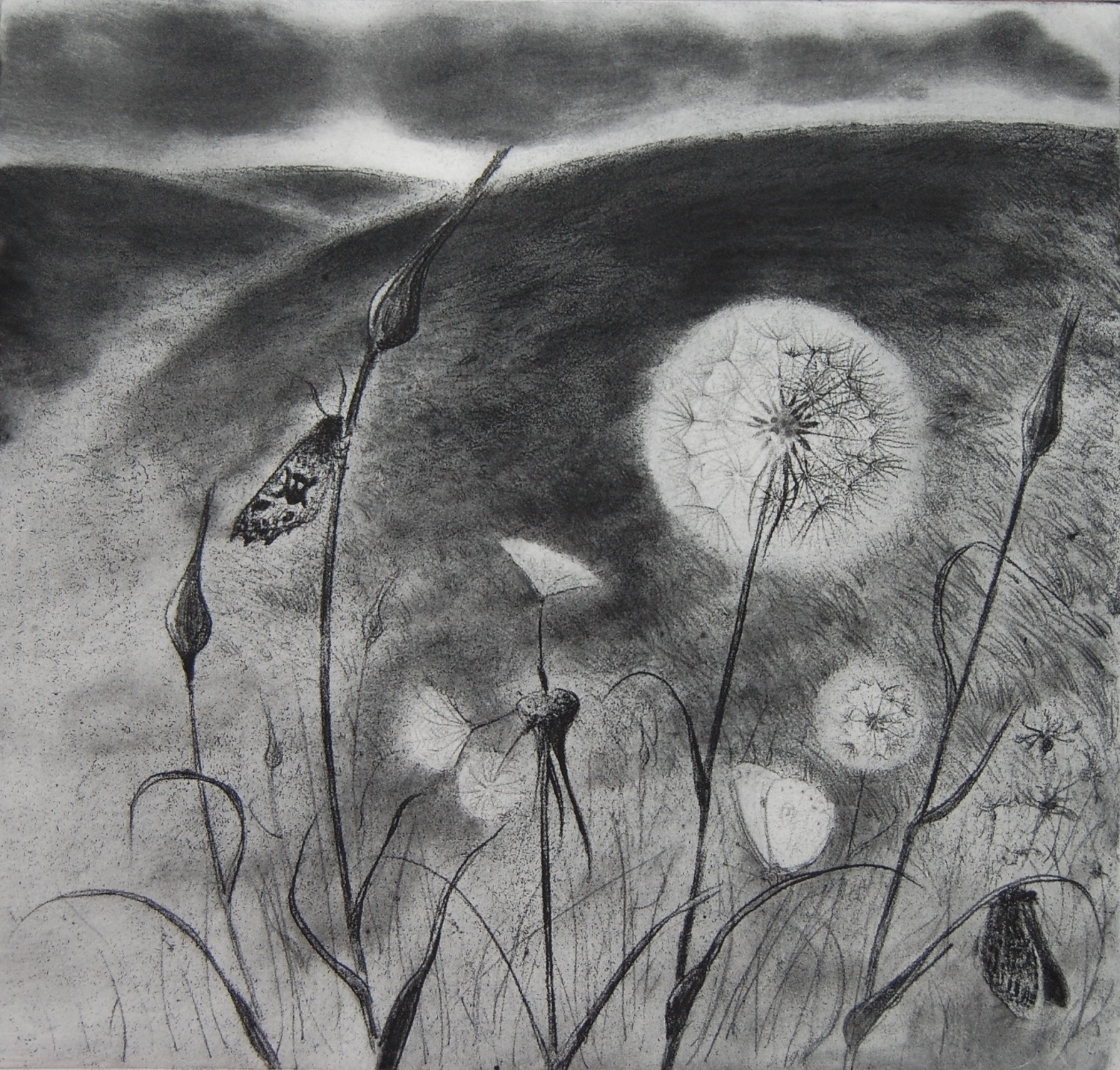 When the Wind Comes to Carry us Away   etching   27 x 29 cm  £230