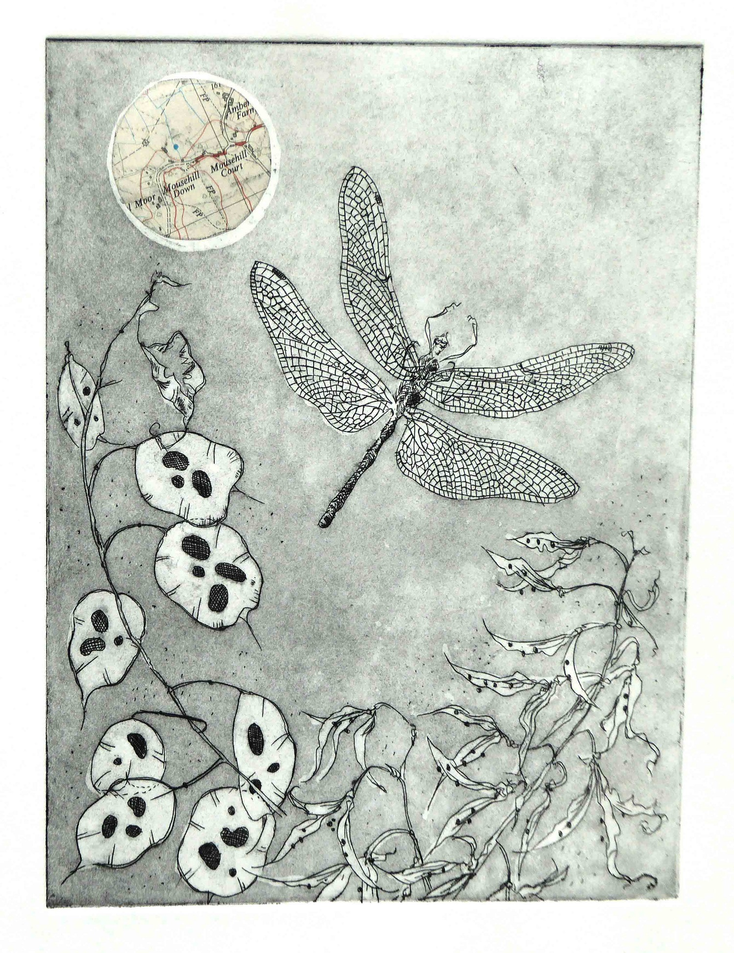 Honesty and Dragonfly   etching  with chine colle  SOLD