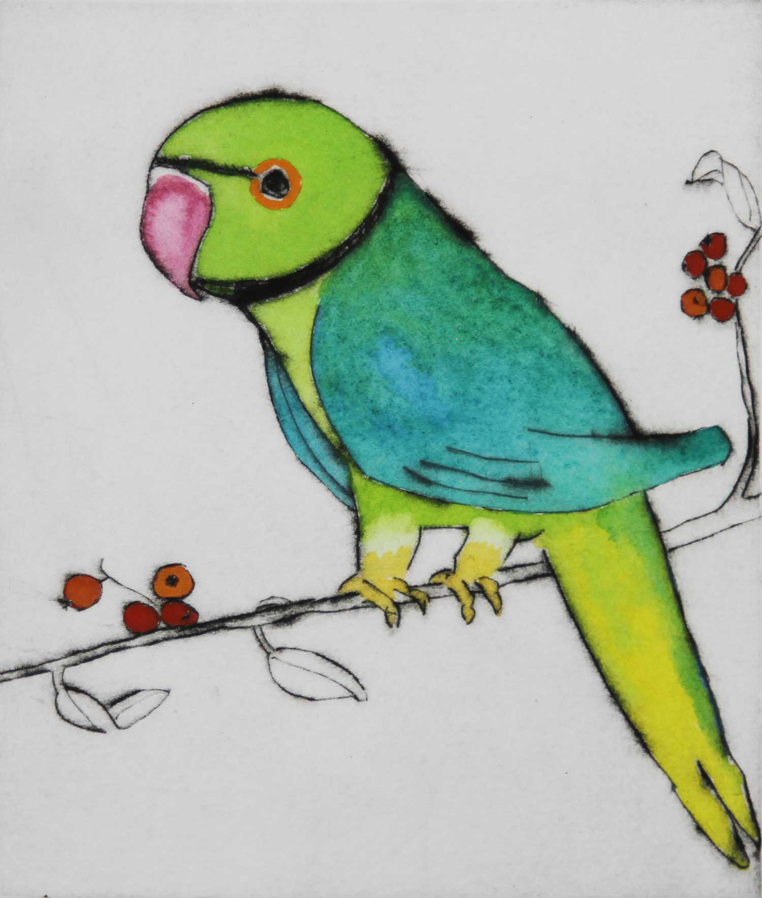 London Parakeet   drypoint  and watercolour  15 x 12.5 cm  £225 unframed