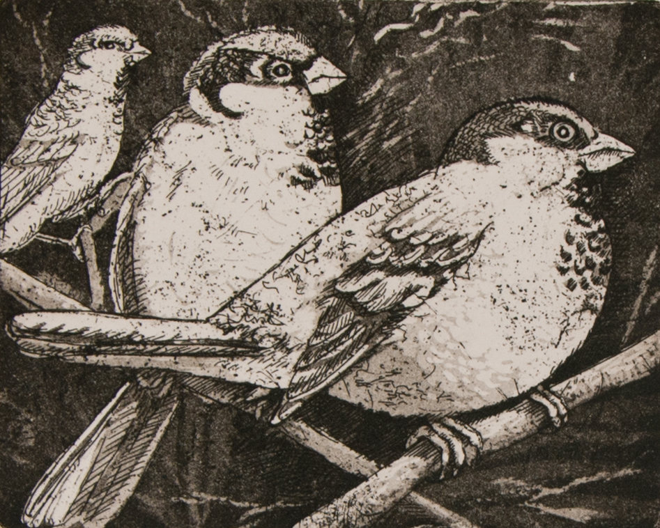 Sparrows   etching / aquatint   £65 (unframed)
