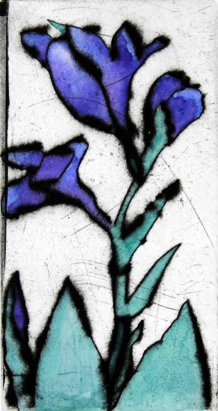 Blue Iris   drypoint  and watercolour  .  £135 unframed