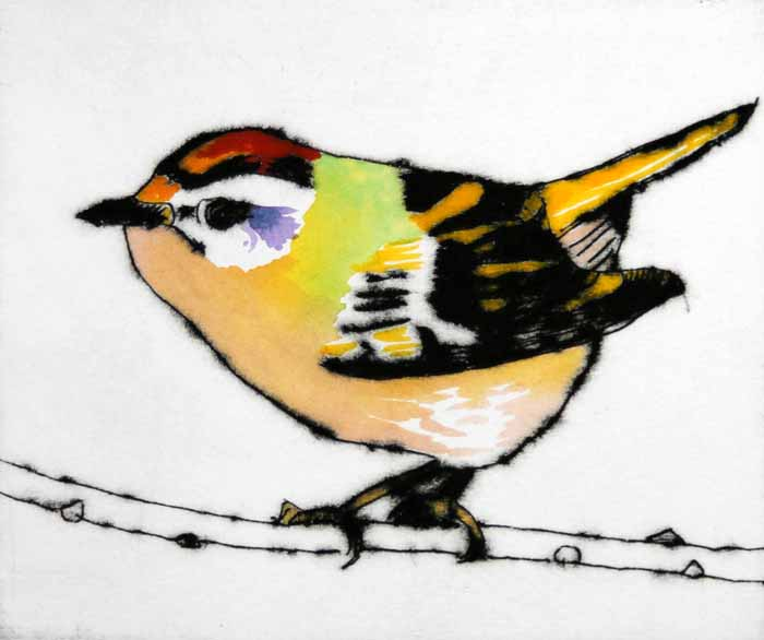 Feisty Firecrest   drypoint  and watercolour  125 x 150mm  SOLD OUT