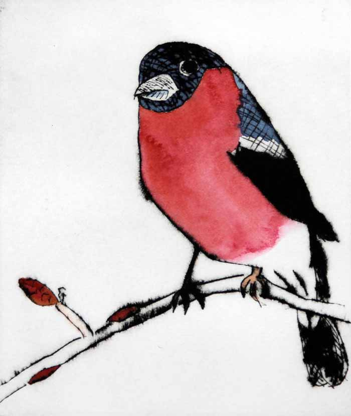 Spring Bullfinch   drypoint  and watercolour  .  SOLD OUT