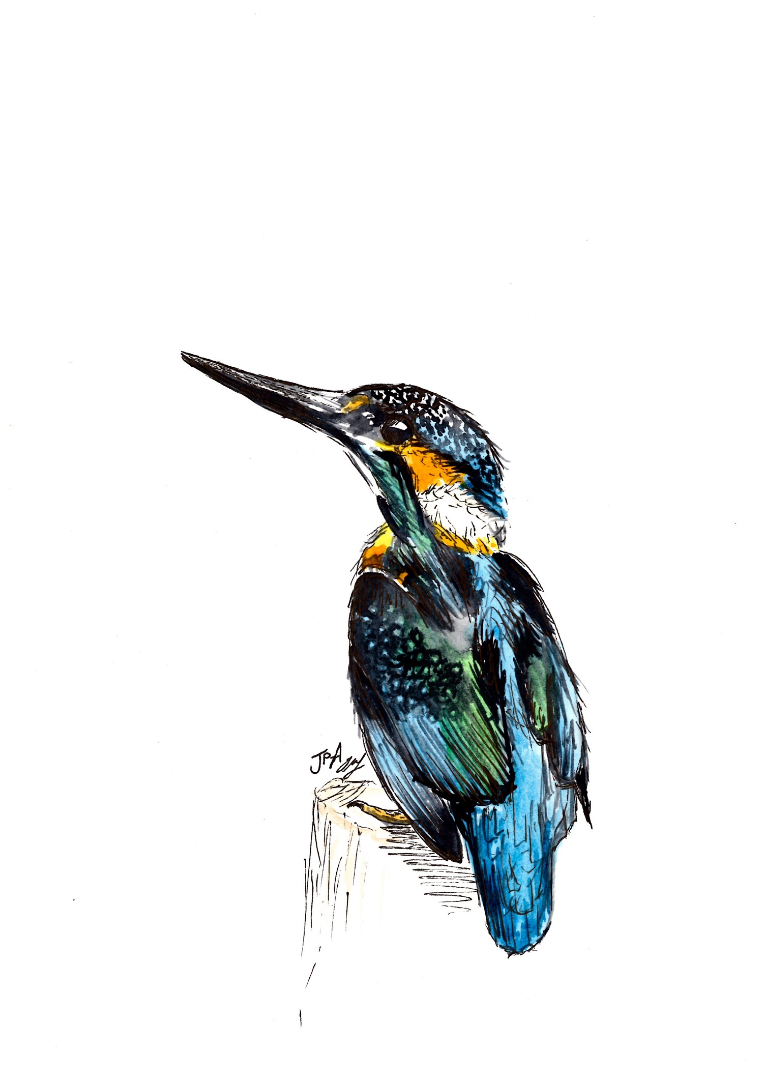 King of the River   watercolour & ink    sold