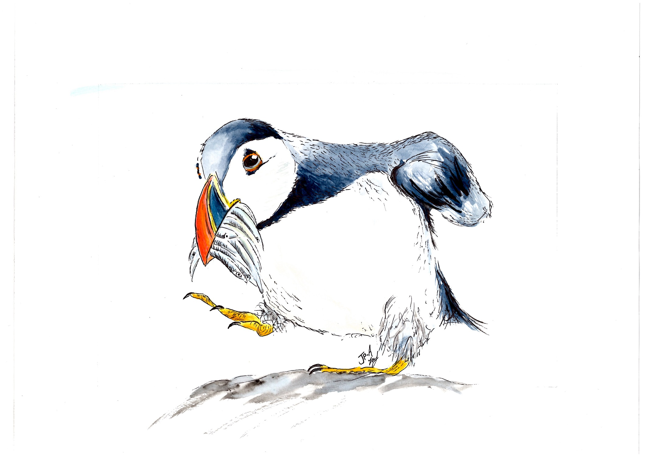 Puffin Love   watercolour & ink    £145