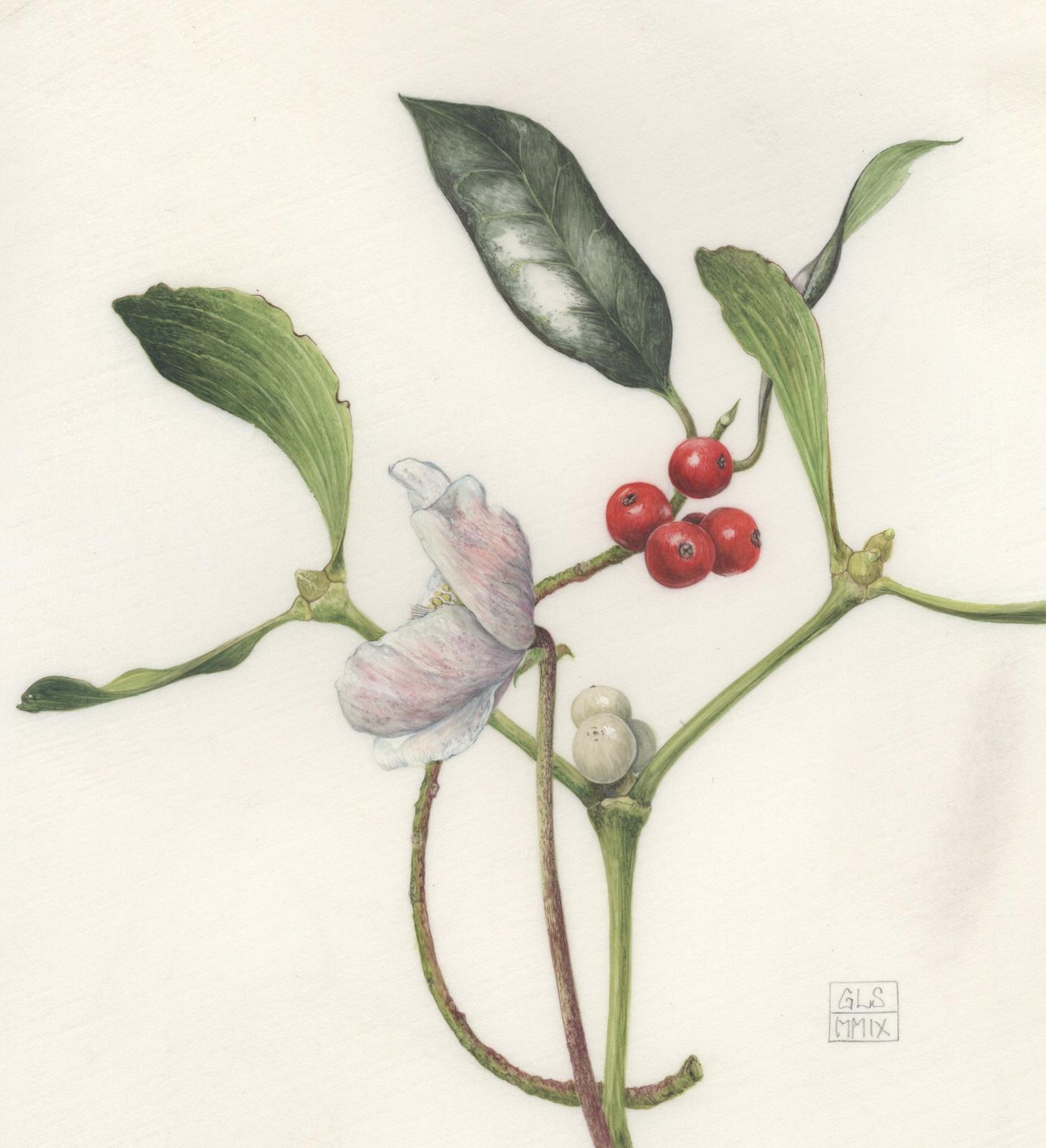 Christmas Rose, Mistletoe and Holly  watercolour on kelmscott vellum  14.5 x 15.5 cm  SOLD