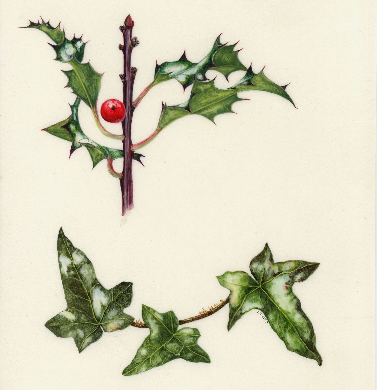 The Holly and the Ivy  watercolour on kelmscott vellum  30 x 33.5 cm  £360 (framed)
