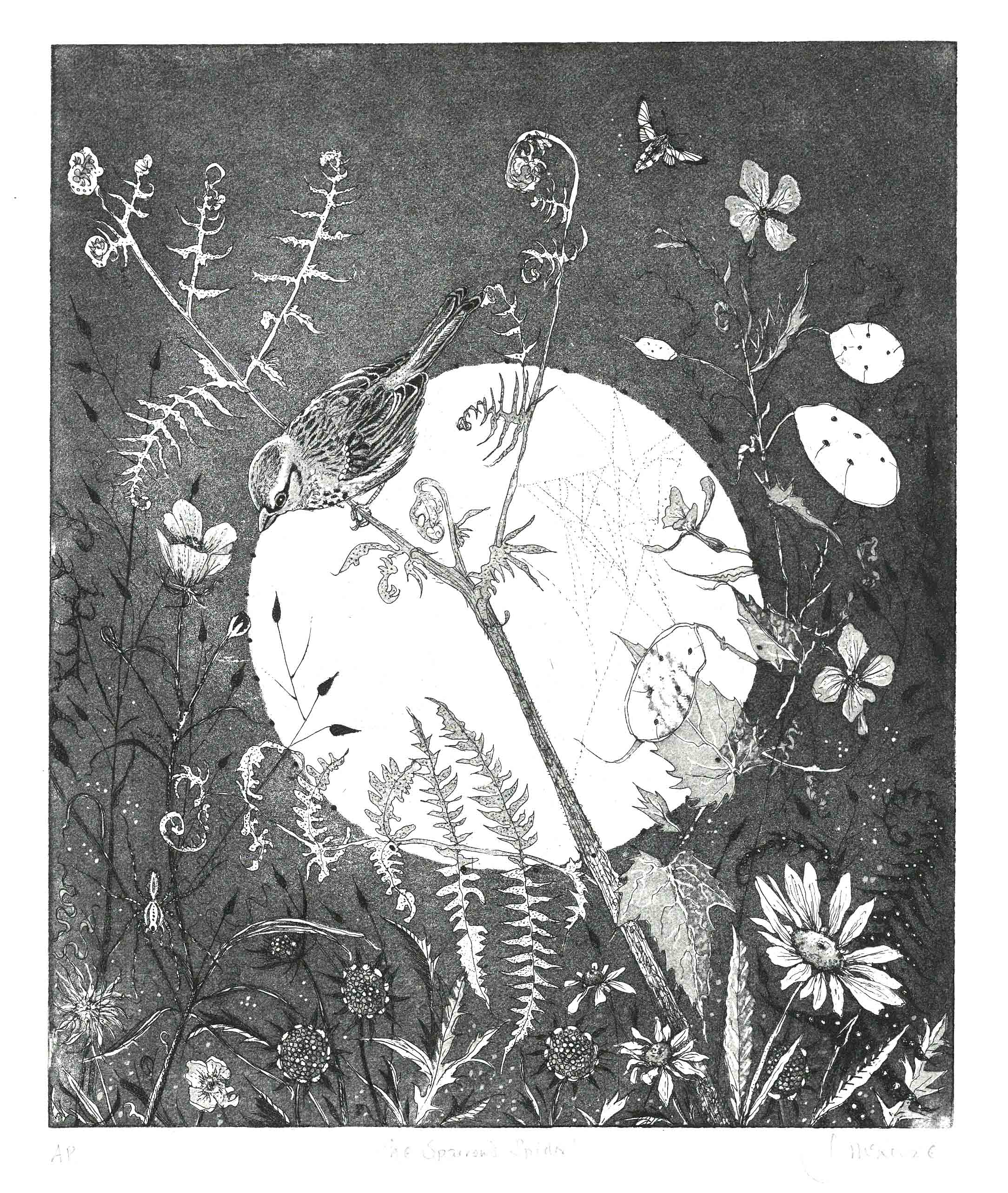 Julia McKenzie   Sparrows Spider  etching