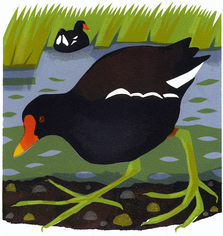 Moorhen   serigraph   edition of 8  30 x 30 cm  £280 framed, £210 unframed