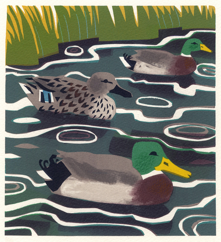 Mallard   serigraph   edition of 10  30 x 30 cm  £280 framed, £210 unframed