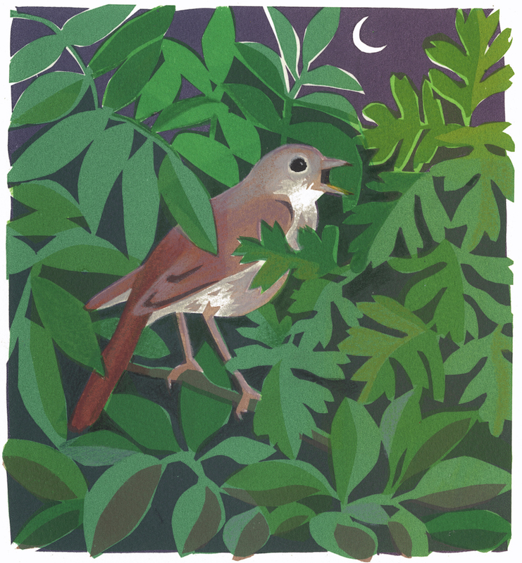 Nightingale   serigraph   edition of 8  30 x 30 cm  £280 framed, £210 unframed