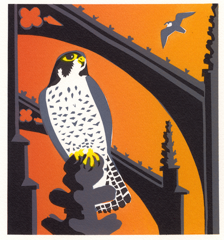 Peregrine Sunset   serigraph   edition of 10  30 x 30 cm  £280 framed, £210 unframed
