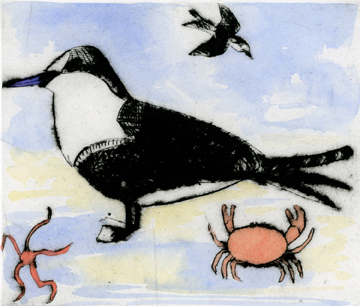 Tern   drypoint  and watercolour  12.5 x 14.5 cm  £295 framed £225 unframed