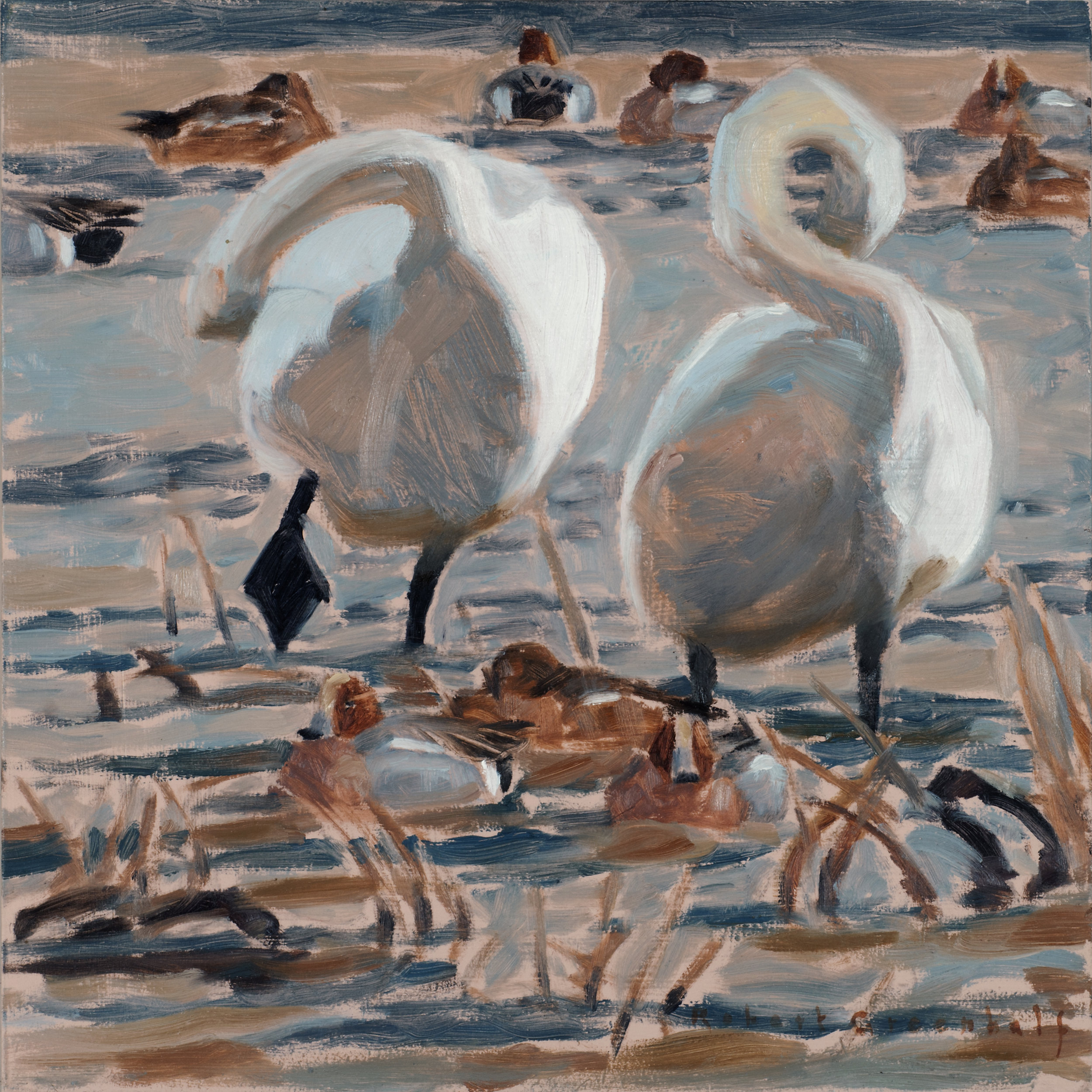 Bewick's Swans and Wigeon  oil  28cmx28cm  £500