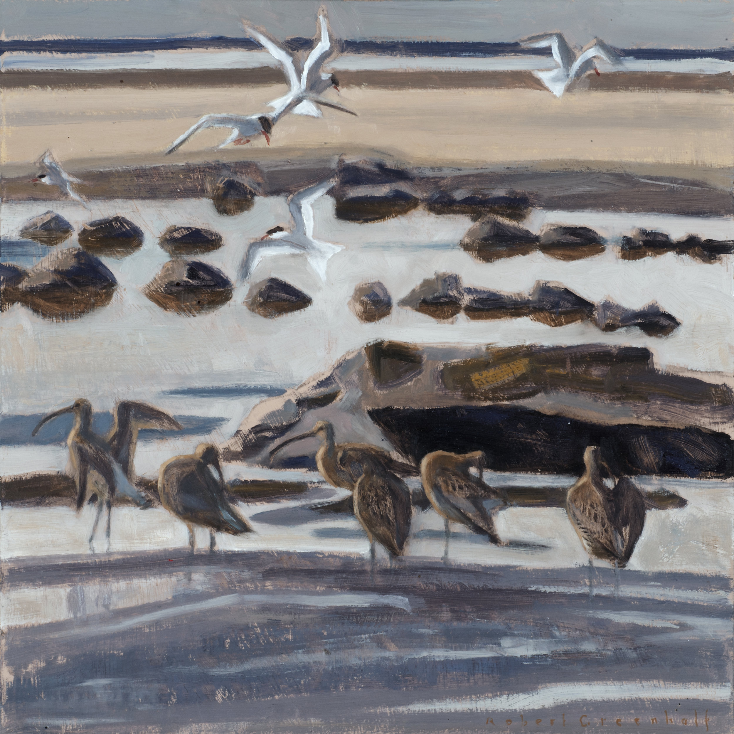 Curlews and Fishing Terns  oil  36cmx36cm  sold