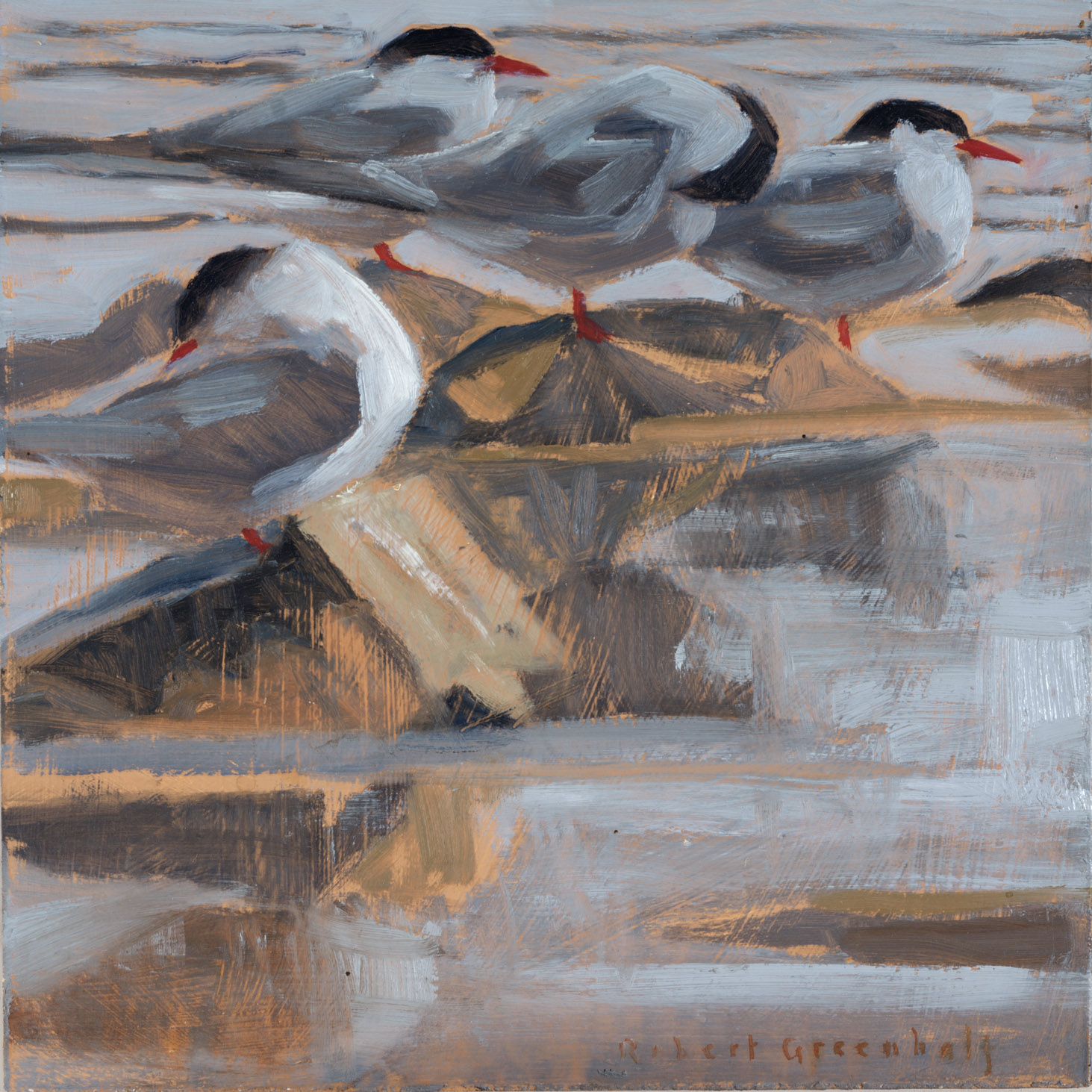 Arctic Terns  oil  25x25  sold