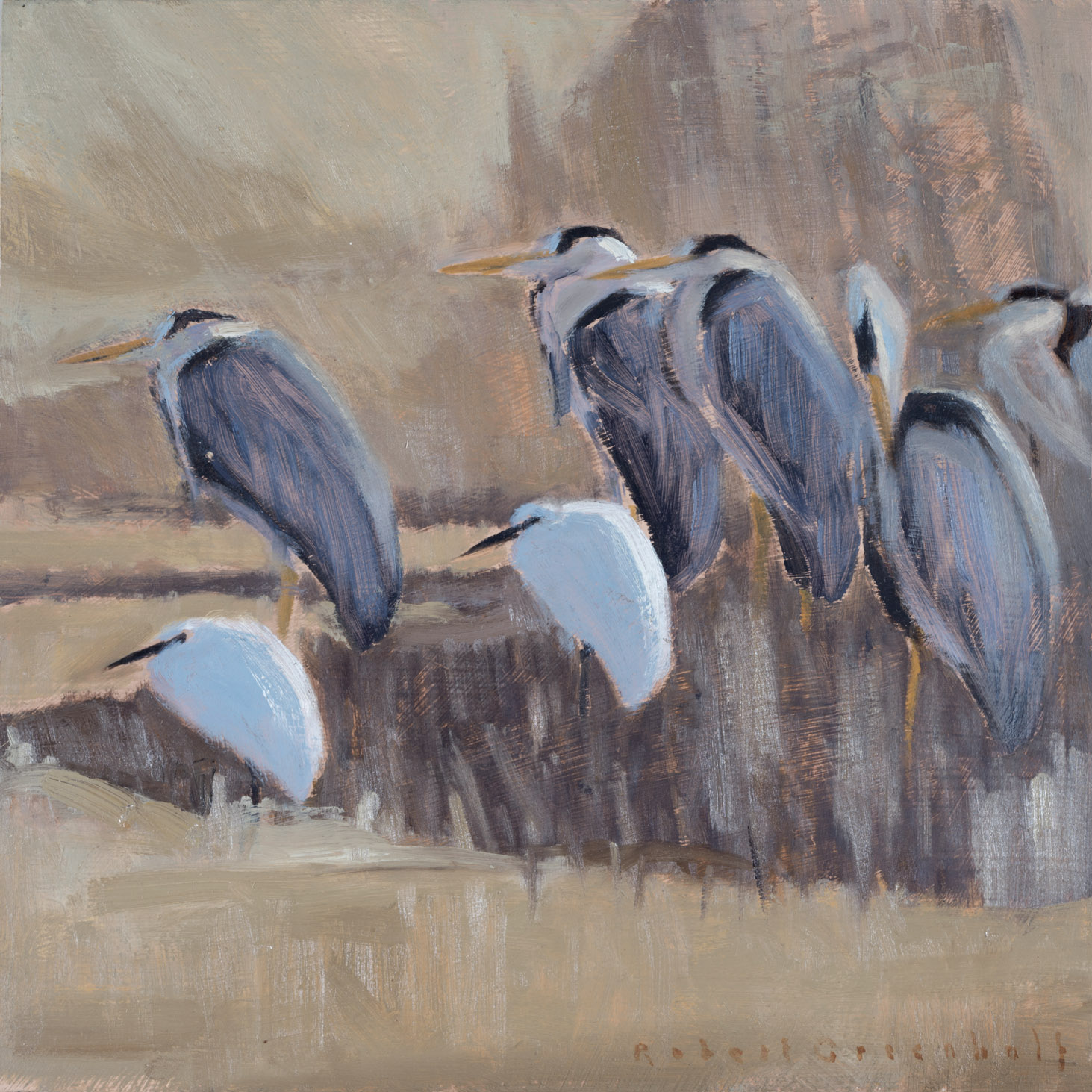 Herons and Egrets  oil  25xcm25cm  sold