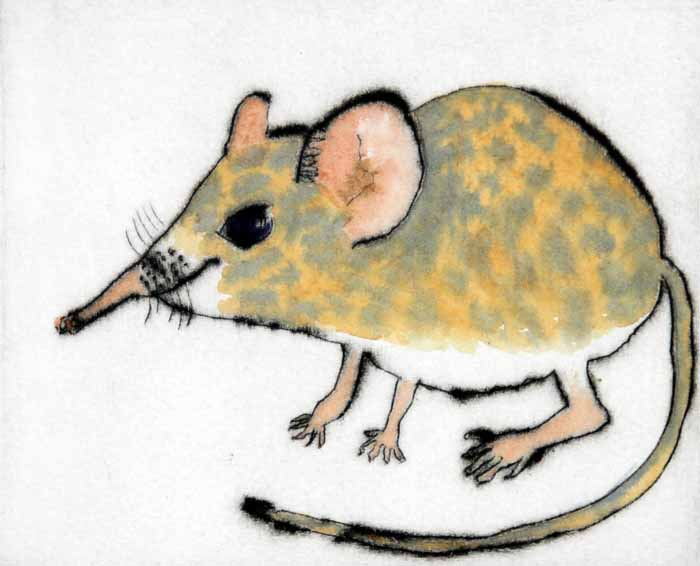 Shrew   drypoint  and watercolour  12.5 x 15 cm  £199 unframed