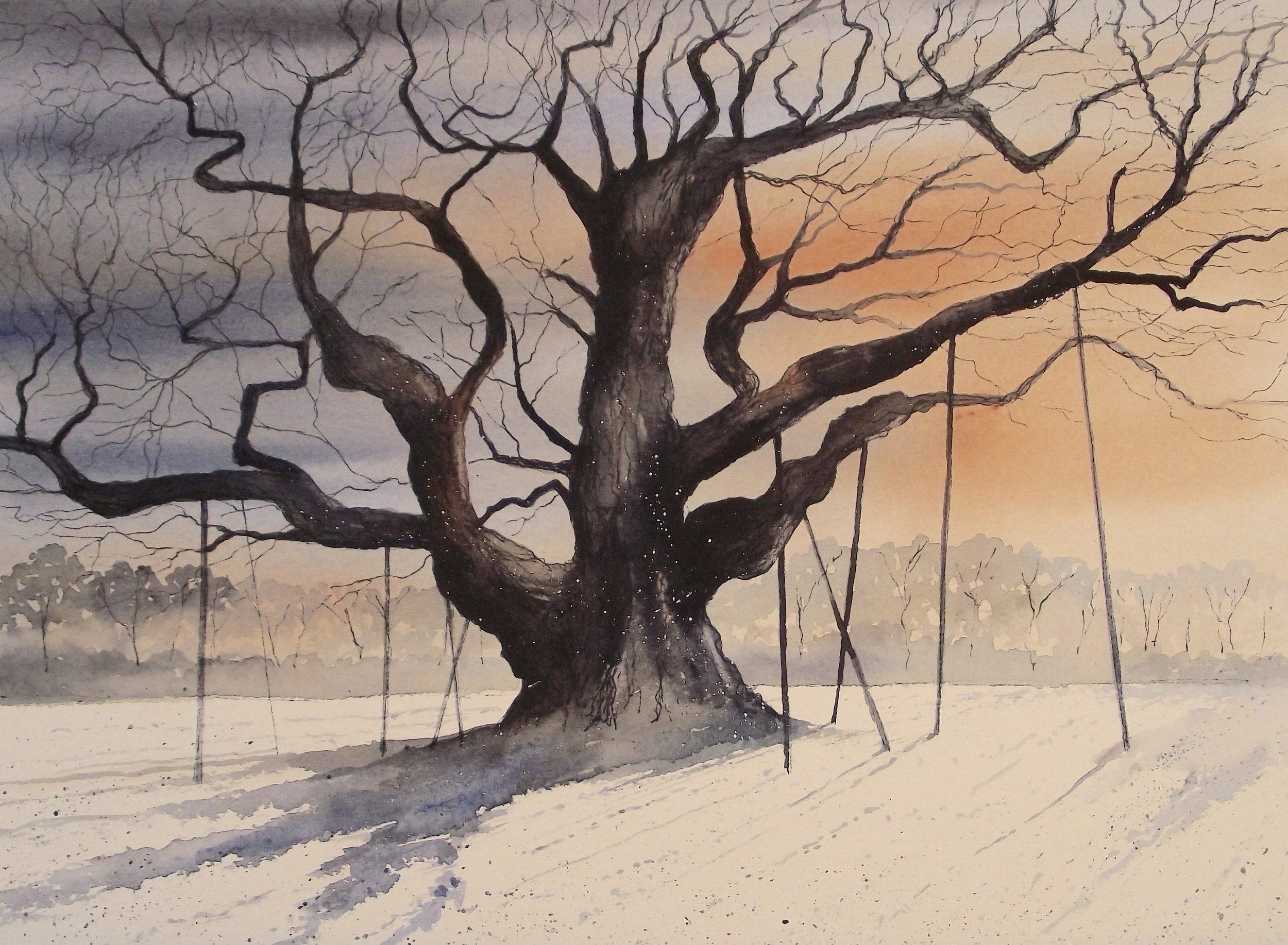 """Major Oak  watercolour  20 x 16""""  £445unframed"""