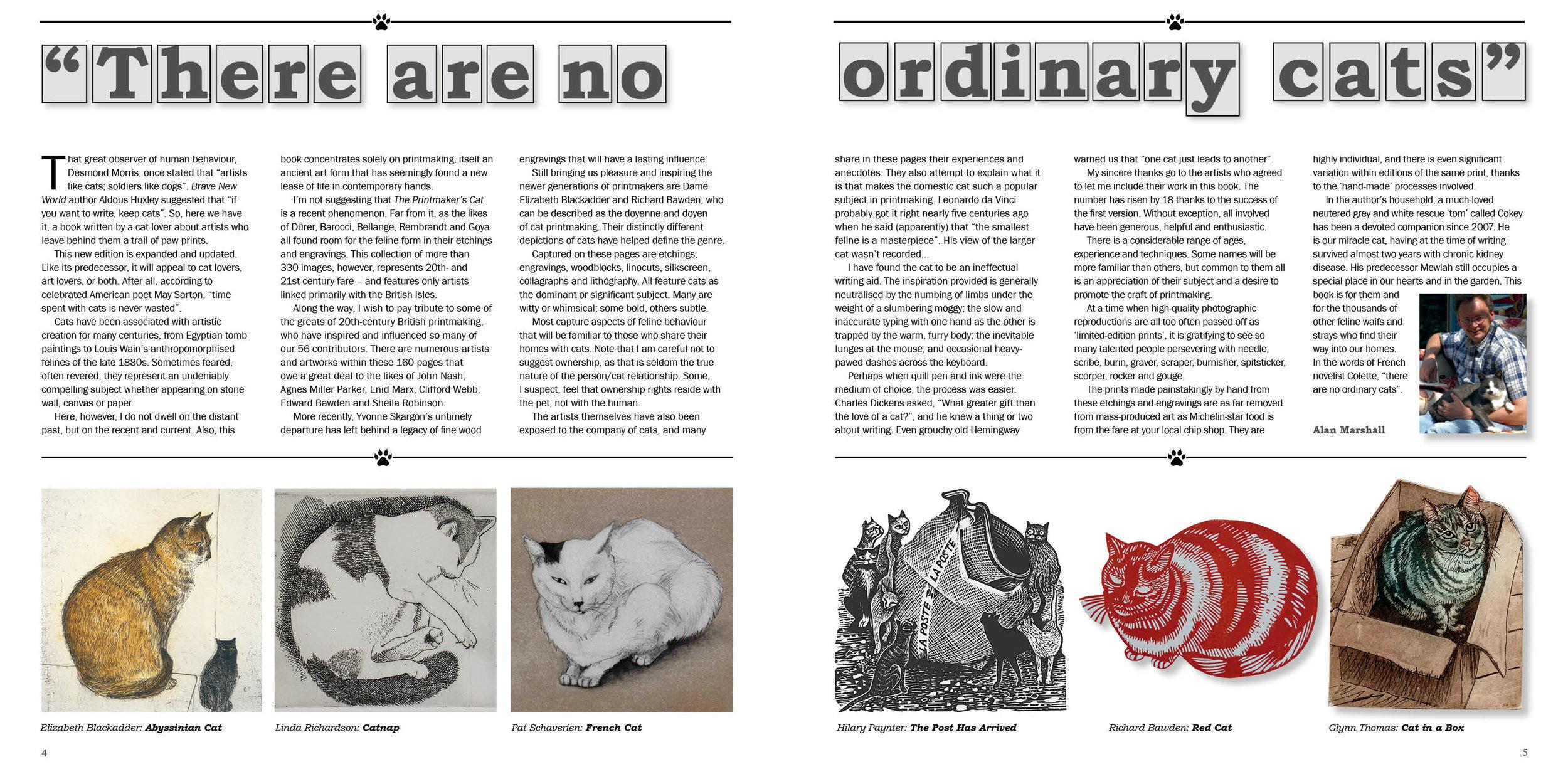 No Ordinary cats.jpg