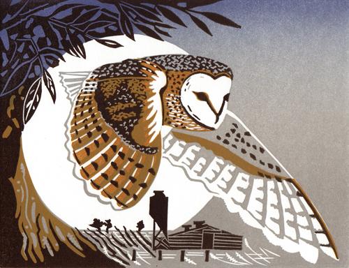 Pam Grimmond   Barn Owl