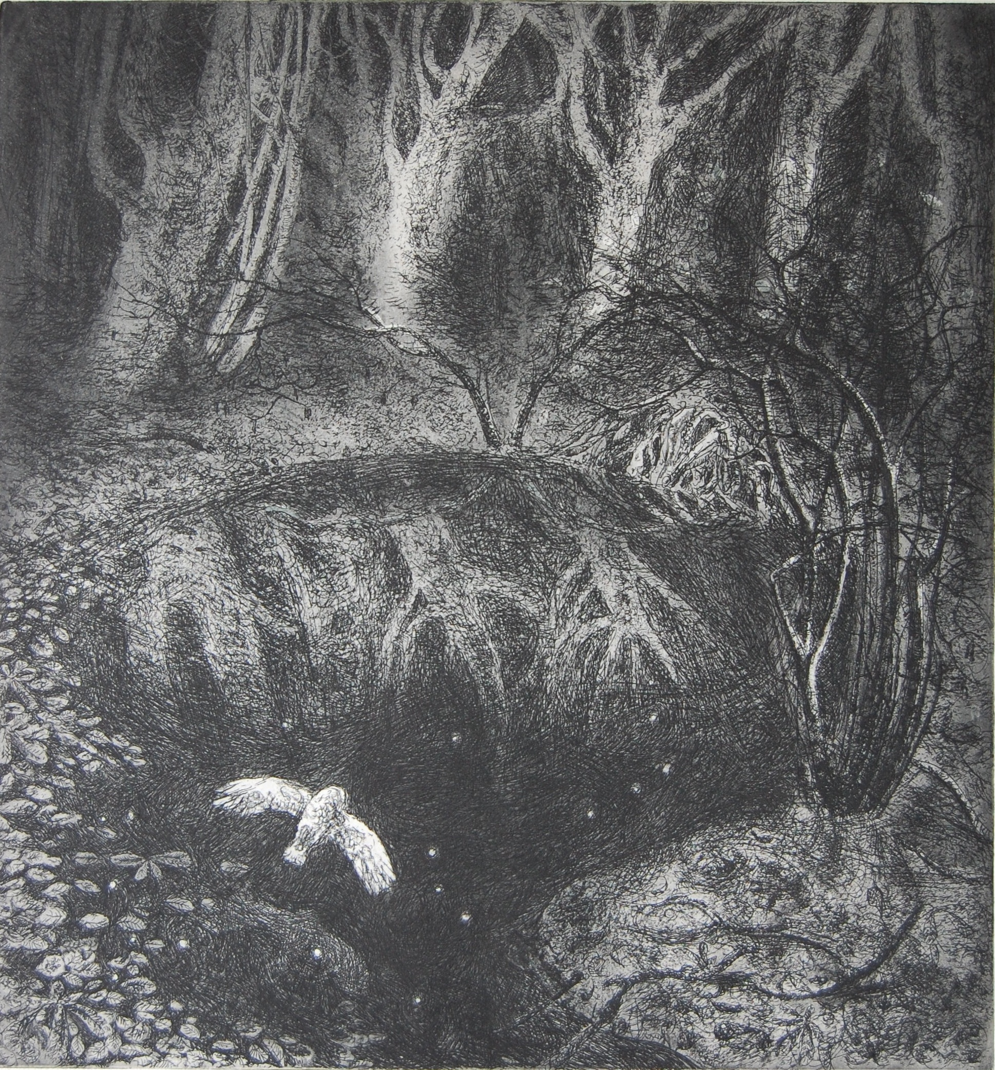 Leaves and Stars  Etching  27 x 29 cm  £230 (Framed)  £180 (Unframed)