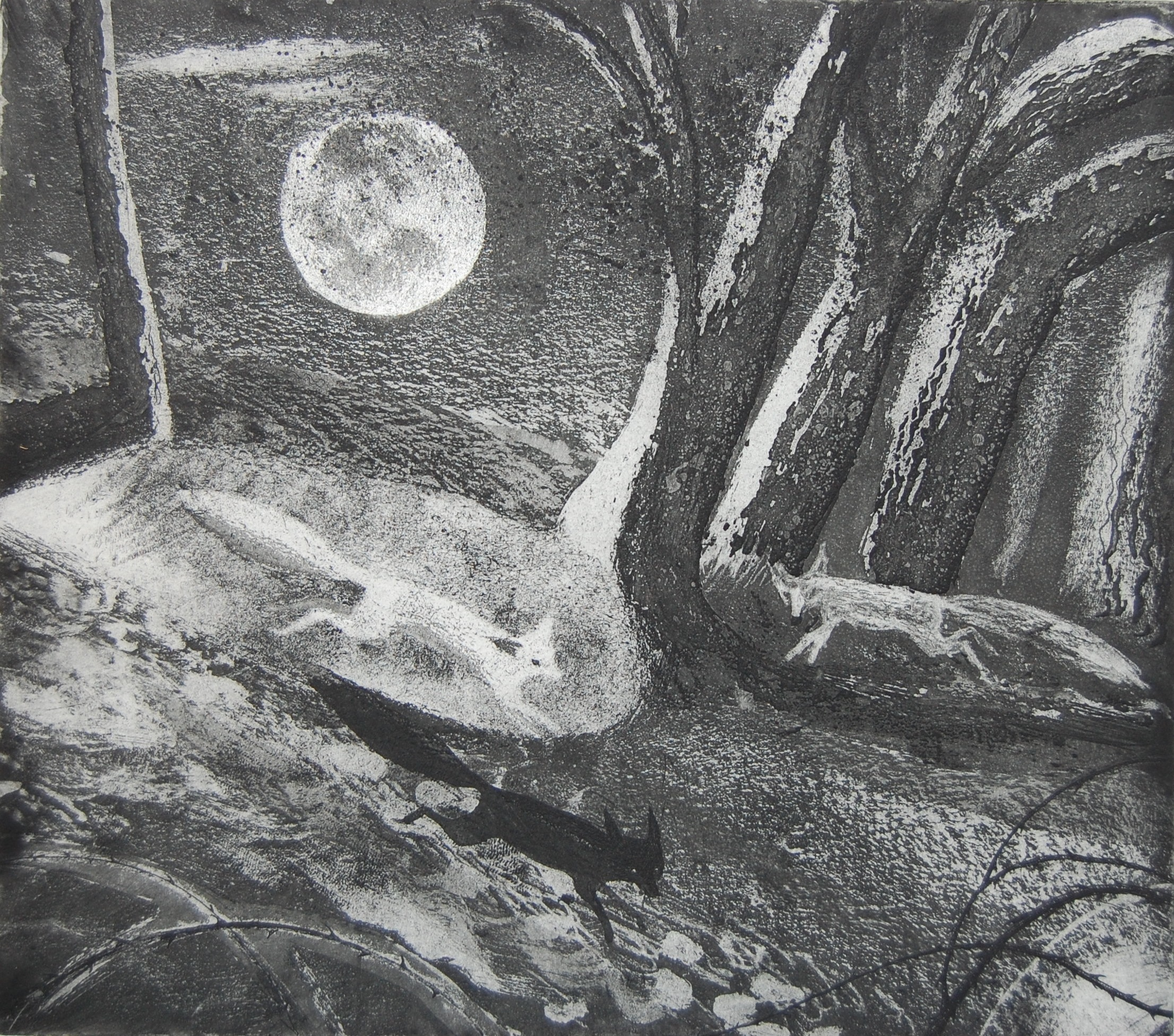 Silver Fox  Etching  24 x 27 cm  £220 (framed)  £175 (Unframed)