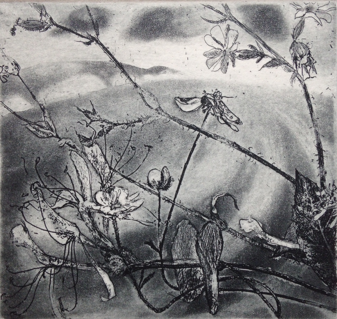 Flowers above the sea  Etching   10 x 9 cm   £95 (framed)  £65 (unframed)